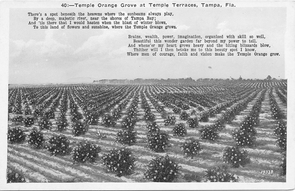 Temple Terrace Orange Grove
